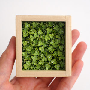 Clovers Shadow box illustration by Miki Sato